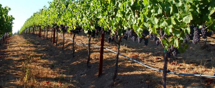 капково напояване и други методи за поливане на на лозови масиви с грозде