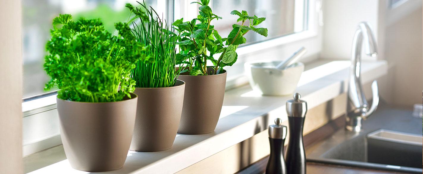 саксии за отглеждане на свежи и пресни подправки, билки или цветя у дома