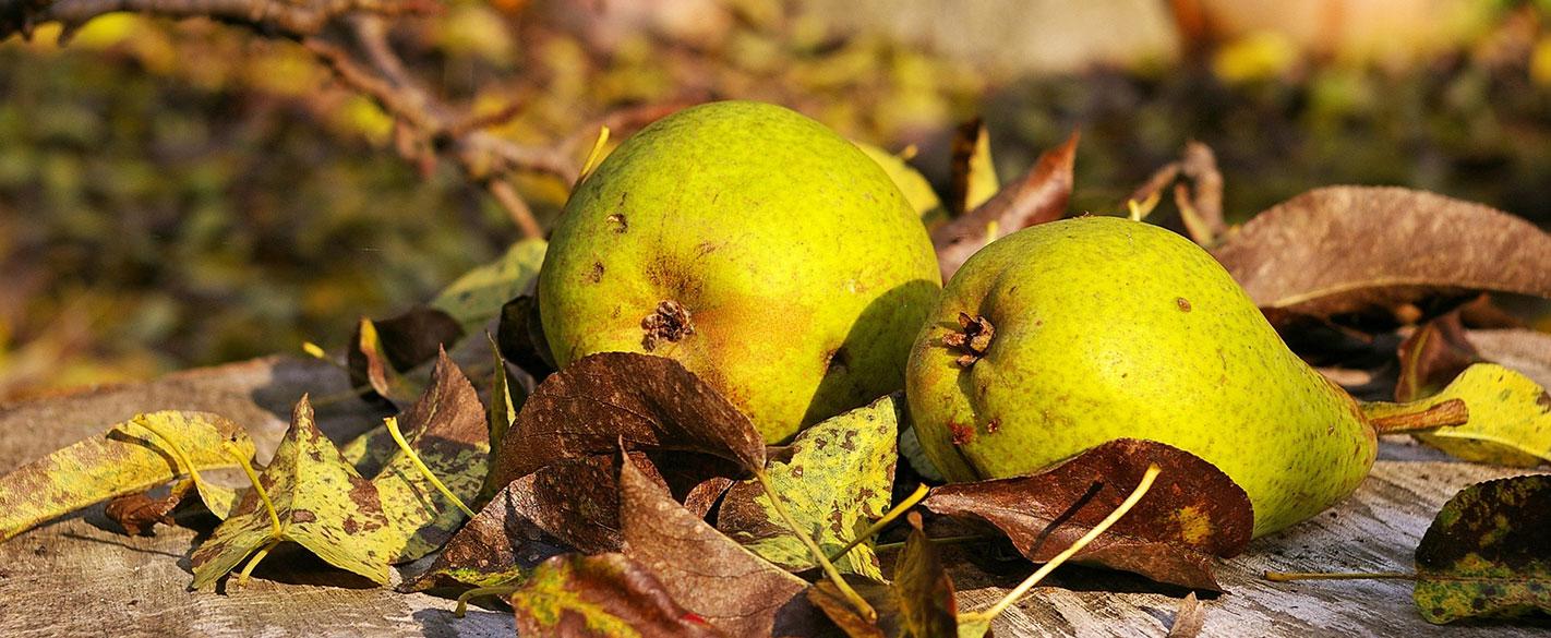 Овощна градина с круши и съвети за резитба на дръвчета